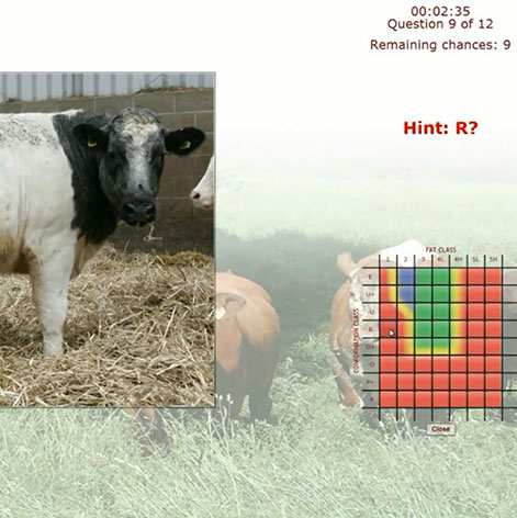 Beef Classification App