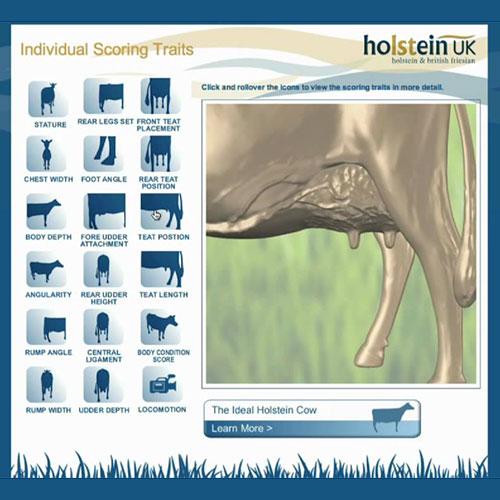 Virtual Holstein