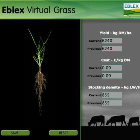 Virtual Grass